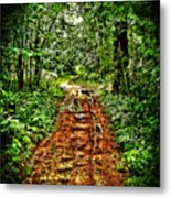 Road In The Wilderness Metal Print