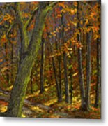 Road In The Woods Metal Print