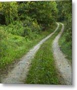 Road In Woods 1 D Metal Print