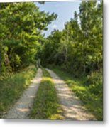Road In Woods 1 F Metal Print