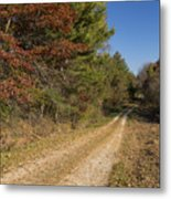 Road In Woods Autumn 5 Metal Print