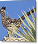 Road Runner 3 Metal Print