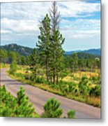 Road Through Custer State Park Metal Print