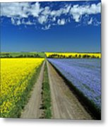 Road Through Flowering Flax And Canola Metal Print