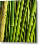 Road To Hana Bamboo Panorama - Maui Hawaii Metal Print