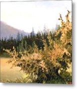 Roadside Apple Tree Metal Print
