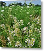 Roadside Bouquet Of Wildflowers In Mchenry County Metal Print