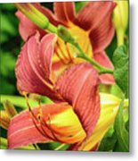 Roadside Lily Metal Print