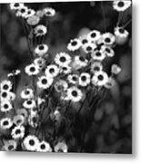 Roadside Wildflowers Metal Print
