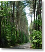 Roadway At Fish Creek Metal Print
