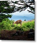 Roan Deer Metal Print