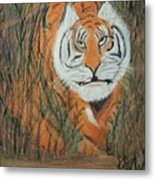 Roaring Tiger James Metal Print