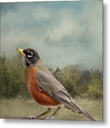 Robin Abstract Background Metal Print