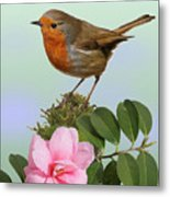 Robin And Camellia Flower Metal Print