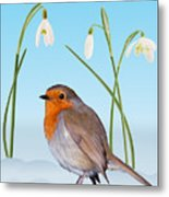 Robin And Cold Snowdrops Metal Print