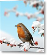 Robin And Cotoneaster With Snow Metal Print