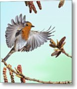 Robin And Poplar Metal Print