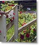 Robin And Roses - Gently Cross Your Eyes And Focus On The Middle Image That Appears Metal Print