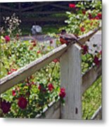 Robin And Roses Metal Print