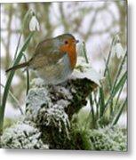 Robin And Snowdrops Metal Print