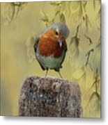 Robin Bird Metal Print