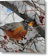 Robin Eating A Berry Metal Print
