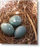 Robin Eggs Metal Print