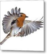 Robin Flying Metal Print