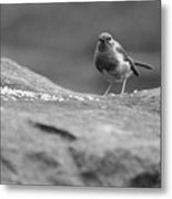 Robin In Black And White Metal Print