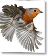Robin In Flight Metal Print