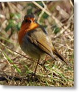Robin In Hedgerow 2 Inch Donegal Metal Print