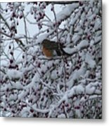 Robin In Snow Metal Print