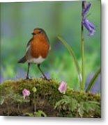 Robin In Spring Wood Metal Print
