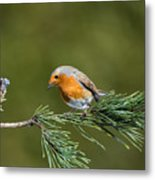 Robin In The Garden Metal Print