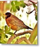 Robin In Tree Metal Print