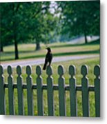 Robin On A Fence Metal Print