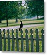 Robin On A Fence Metal Print