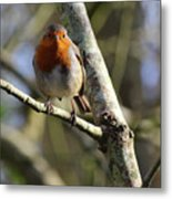 Robin On Branch Donegal Metal Print