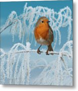 Robin On Frosty Grass Metal Print
