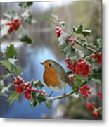Robin On Holly Branch Metal Print