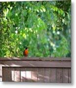 Robin On The Backyard Fence Metal Print
