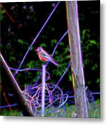 Robin On The Wires Metal Print