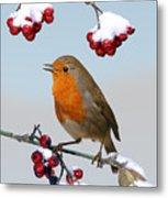 Robin On Winter Cotoneaster Metal Print