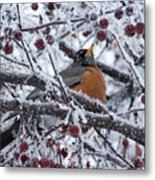 Robin Perched In Crabapple Tree Metal Print