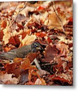 Robin Playing In Fallen Leaves Metal Print
