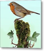 Robin Singing On Ivy-covered Stump Metal Print
