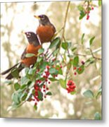 Robins In Holly Metal Print