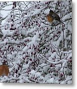 Robins In The Snow Metal Print