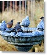 Robins On Birdbath Metal Print
