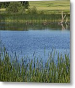 Rochester Wildlife Pond 1 Metal Print